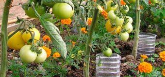 Автоматический полив на огороде