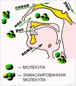 Молекула и замаскированная молекула