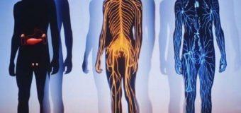 О нашем теле и о себе мы не знаем почти ничего