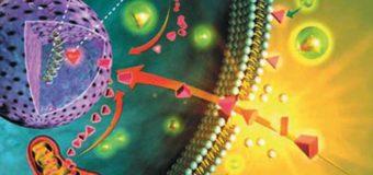Антиоксиданты и свободные радикалы – разбираемся в терминах