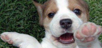 Обоняние собаки. Нюх – наиболее важное собачье ощущение
