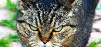 Дело о выселении кота