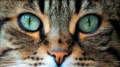 Как кошка видит окружающий мир