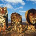 Большие кошки. Породы-рекордсмены
