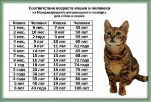 Соответствие возраста кошки человеческому