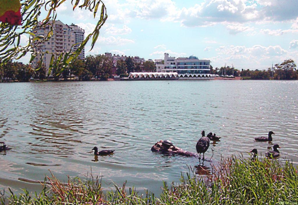 Покровские озера. Верхнее Покровское озеро, август 2020 г.