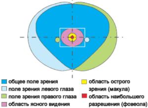Совмещенное поле бинокулярного зрения с областью ясного видения