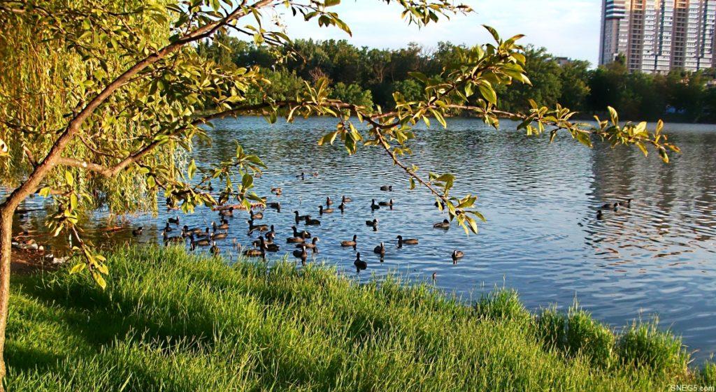 Покровские озера, Верхнее
