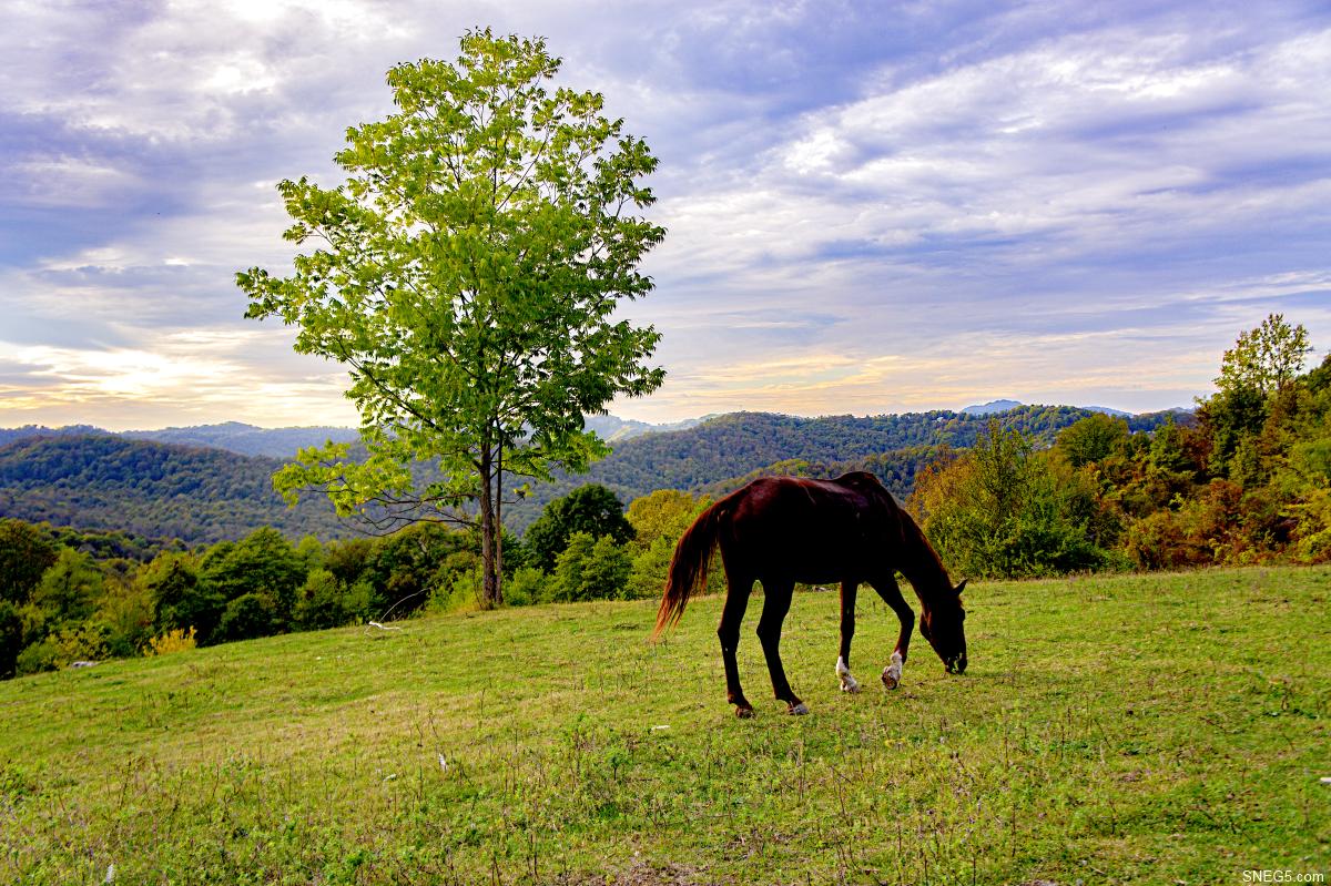 Природа. Лошадь в горах