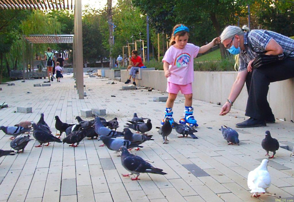 голуби 1