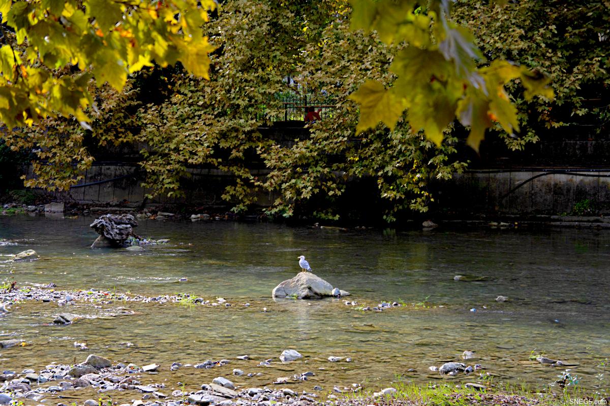 Природа. Река Хоста