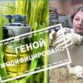 Ирина Ермакова. ГМО как биологическое оружие